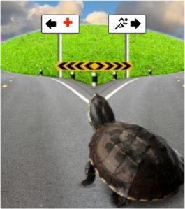 Be the tortoise when recovering from an injury. Exercising too much, too fast will just lead to a longer recovery period. Image courtesy of tongdang and FreeDigitalPhotos.net.