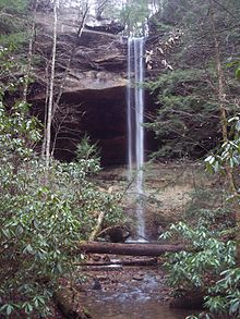 Daniel Boone National Forest is home to Yahoo Falls, a 113 foot waterfall.