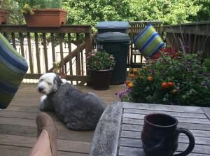 A glorious morning chilling with my favorite Old English Sheepdog. Today is shaping up to be an awesome day!